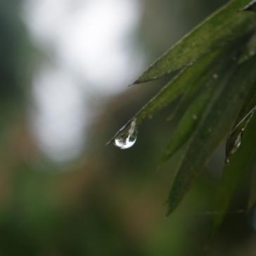 Solitary Tear